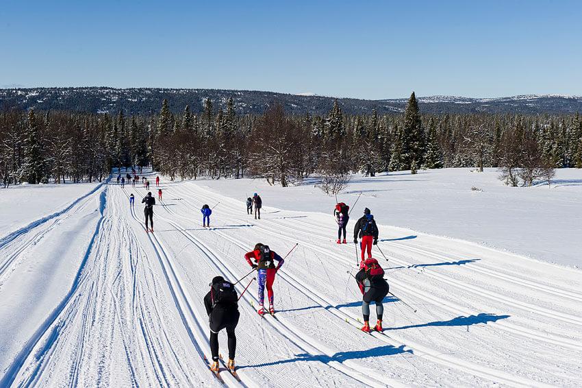 Норвежский королевский марафон Birkebeinerrennet