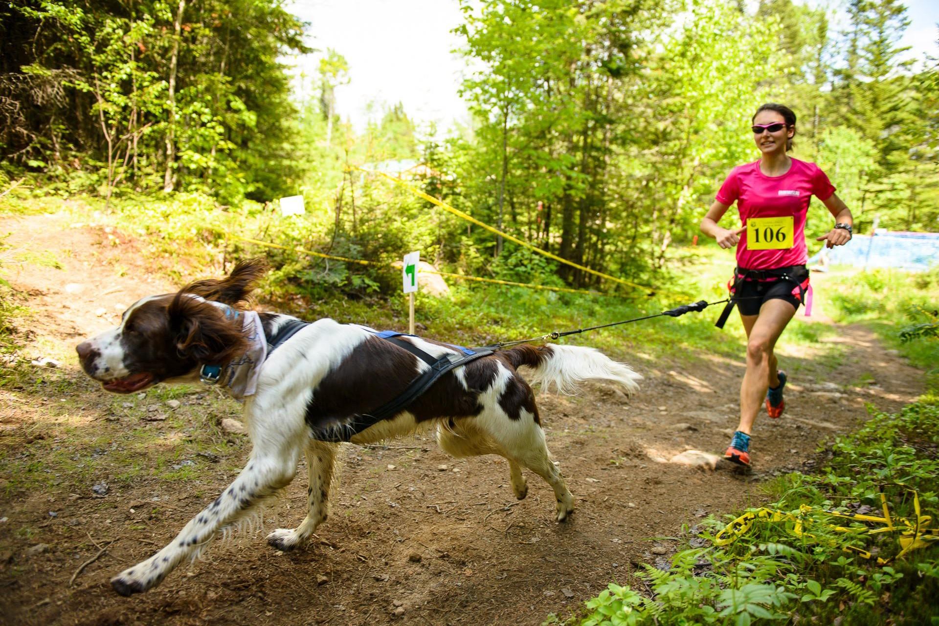 Каникросс: техника спортивного бега с собакой и секреты обучения